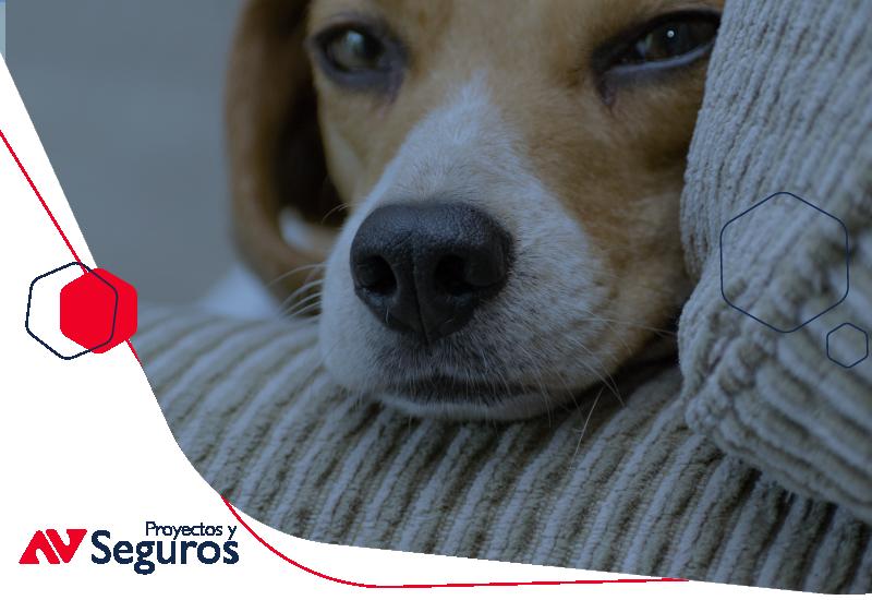 ¿Cuánto vale un seguro para mascotas?